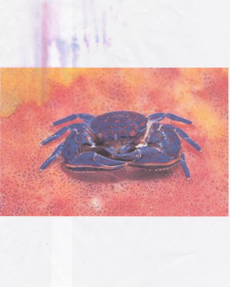 Spider Crab Printed 2015 Scanned October 2018