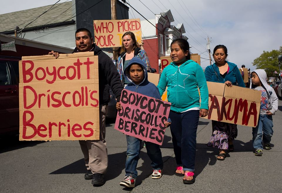 Photo: Boycottsacumaberries.com