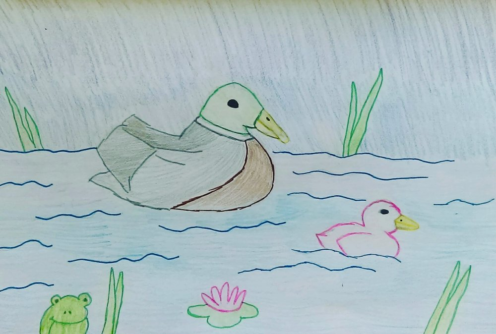 Ducks animals illustragram artwork nature art