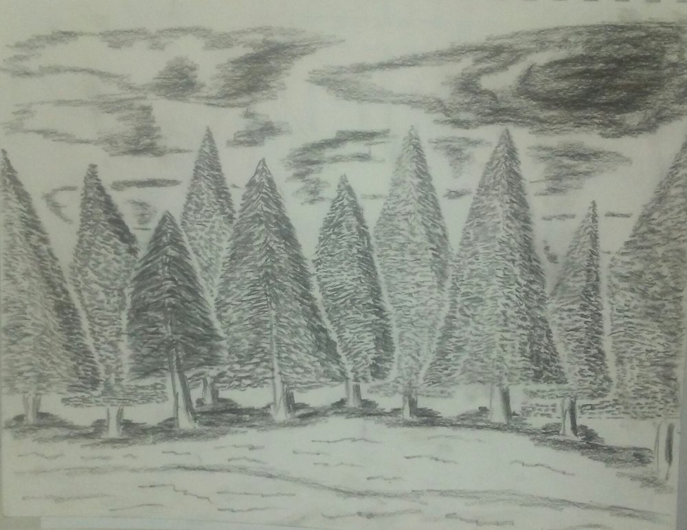 sketch, woods, sky, forest, pine trees, black and white, pencil sketch