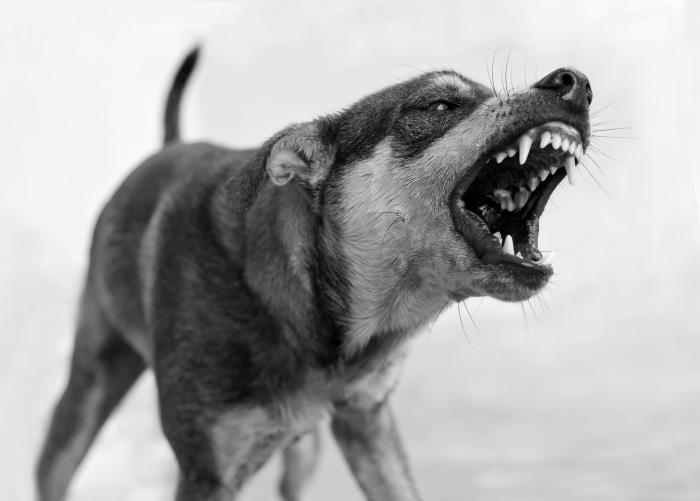 Metro Detroit Dog Bite Attorney
