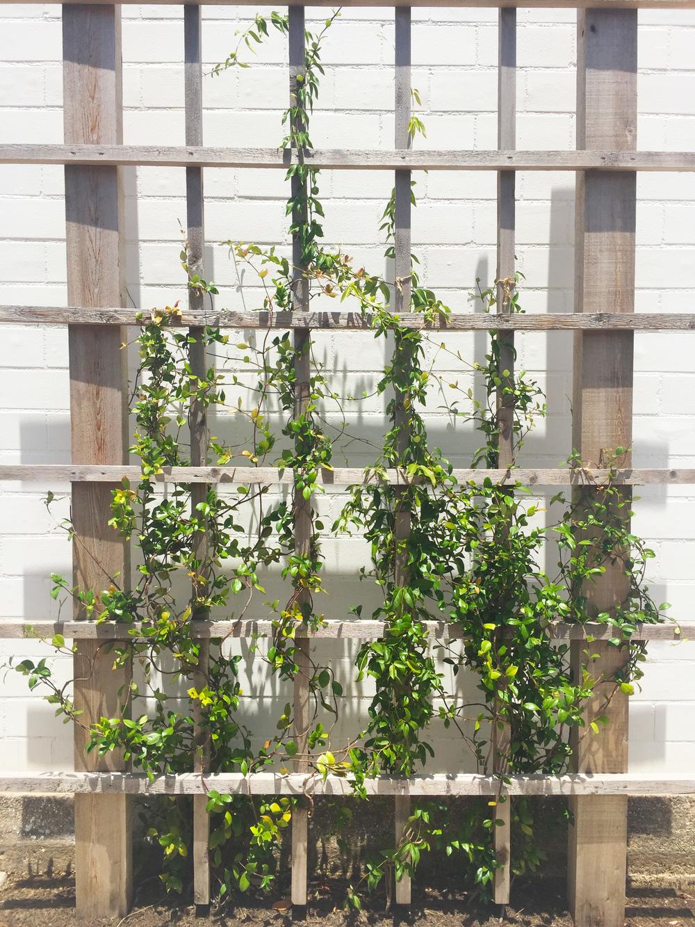 gardenwall.jpg