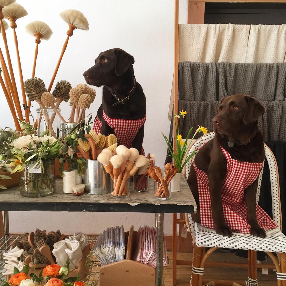Dogs Playing Dress-Up