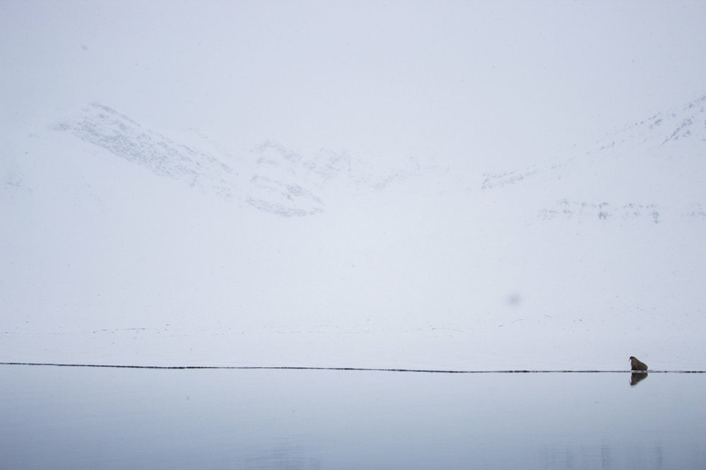Arctic_Pt3 (10 of 51).jpg
