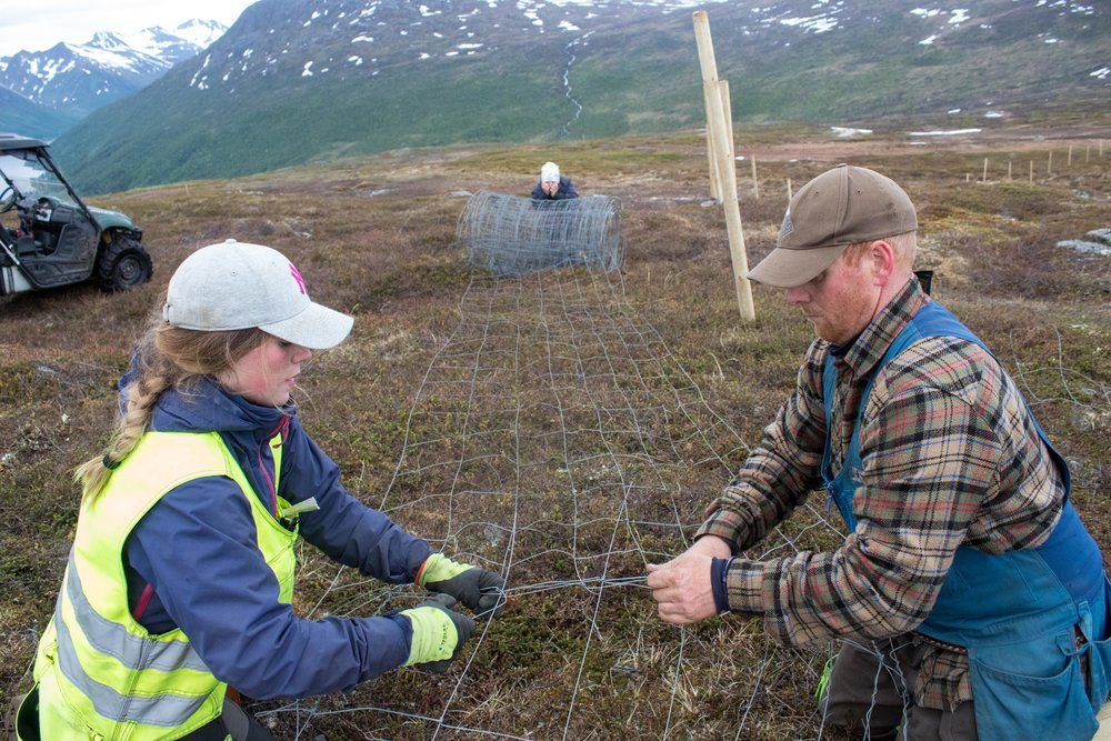 "Sara Katrine, Ulf Isak and Reiulf Aleksandersen prepare for the annual marking of their reindeer calves on Ruksesvárri, or Red Mountain. This pristine area  on the coast of Norway, about 200 miles north of the Arctic Circle, will soon be home to one of the largest on-shore wind farms in Europe. The development is already impacting the Aleksandersen's reindeer herd. Sara Katrine Aleksandersen, 16, is worried about global warming, but she also questions why her family and her reindeer have to bear so much of the cost of fighting it. ""What is better?"" she asks. ""Many reindeers or hundreds of the wind turbines?"""