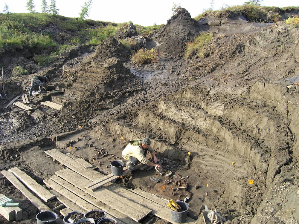 Excavation at the Yana River Site in Siberia