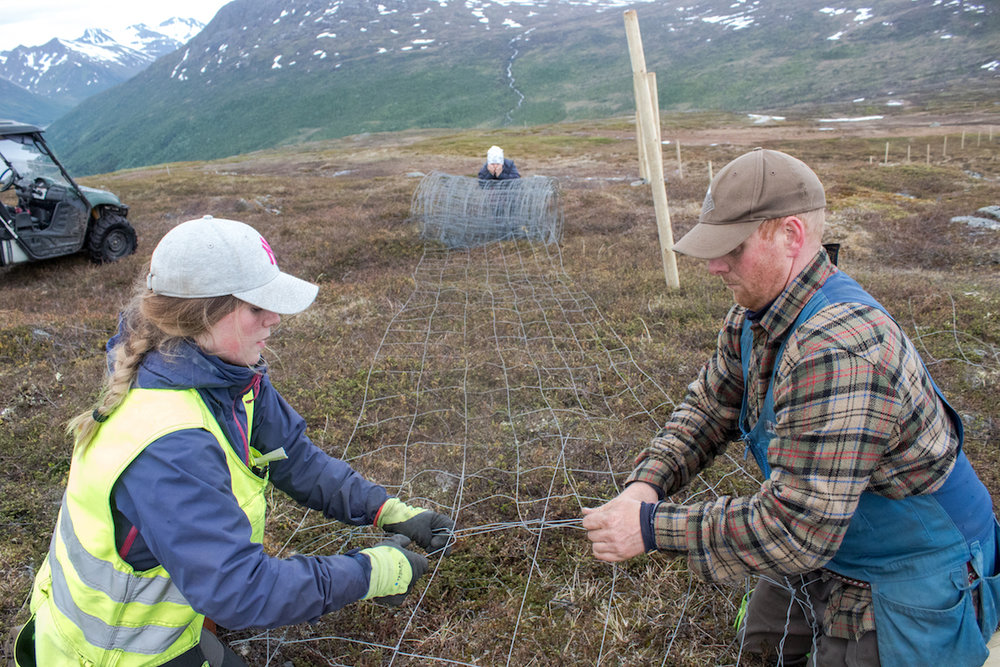 Sara Katrine and Reiulf Aleksandersen work together to make a place where they can gather their reindeer herd.