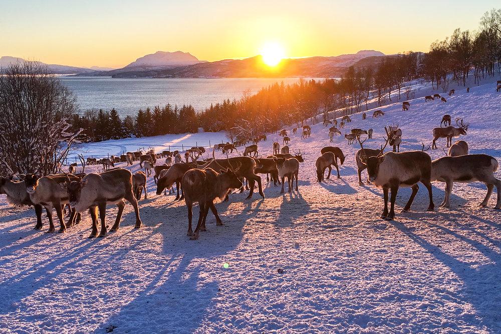 Kvaløya , Norway. January 2019. Photo credit: Amy Martin