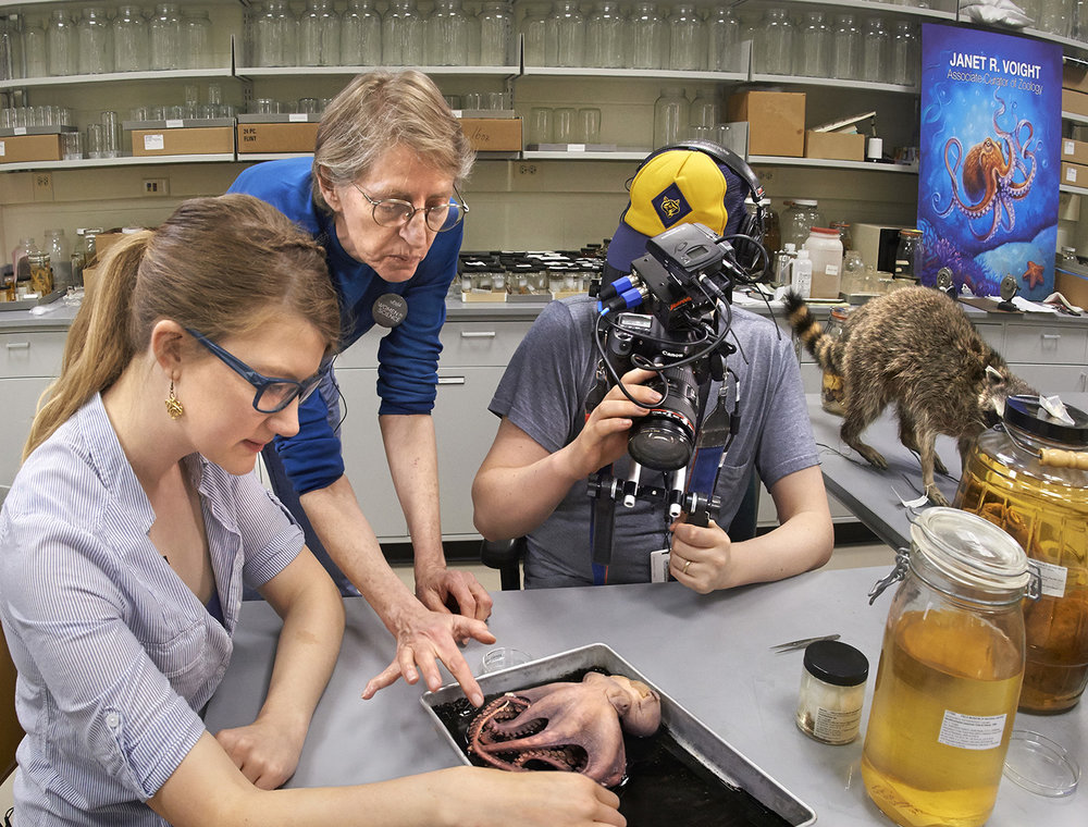 Emily at work with a scientist, a specimen, and Soon Raccoon.  Photo credit: John Weinstein for The Field Museum
