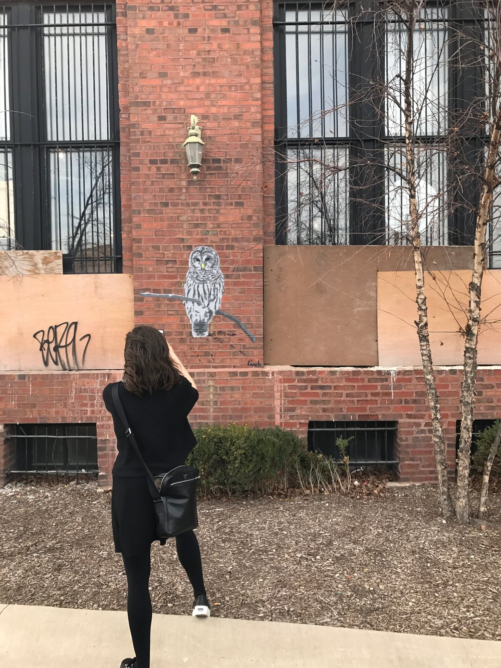Lizy snaps an owl, also by fnnch