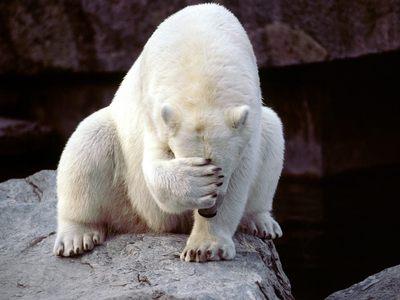 Embearassed-bear_SXsXT_r.jpg