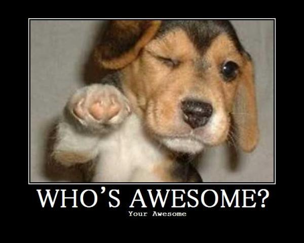 1202958-whos_awesome_puppy.jpg