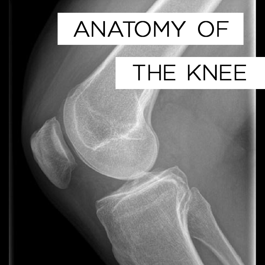 anatomy of the knee.jpg