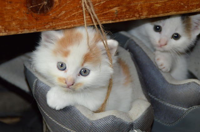 cat-451377_640.jpg