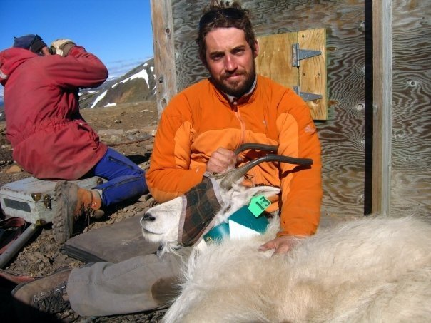 Listen to CBC's story on mountain goat evolutioin