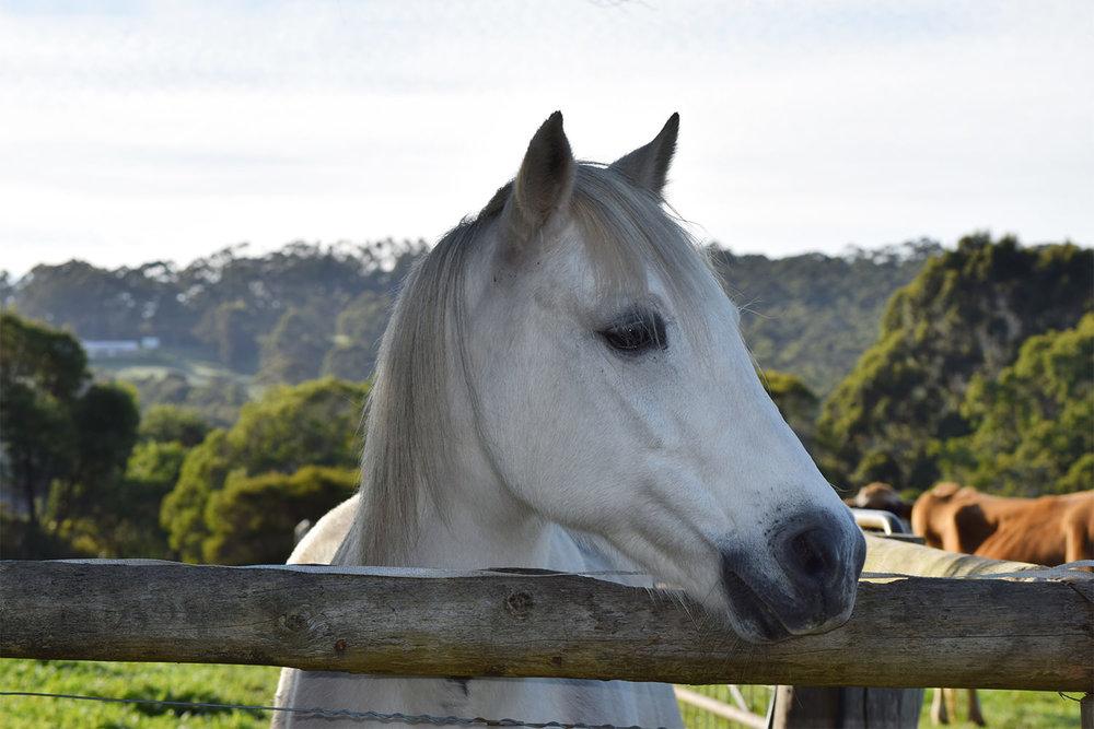 horseriding in denamerk