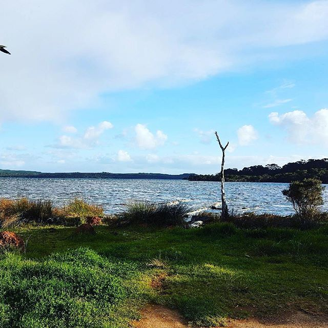 Wilson Inlet is a beautiful sanctuary for birds and wildlife, famous for the Black Swan and the majestic WA Pelican. Tranquil and stunning