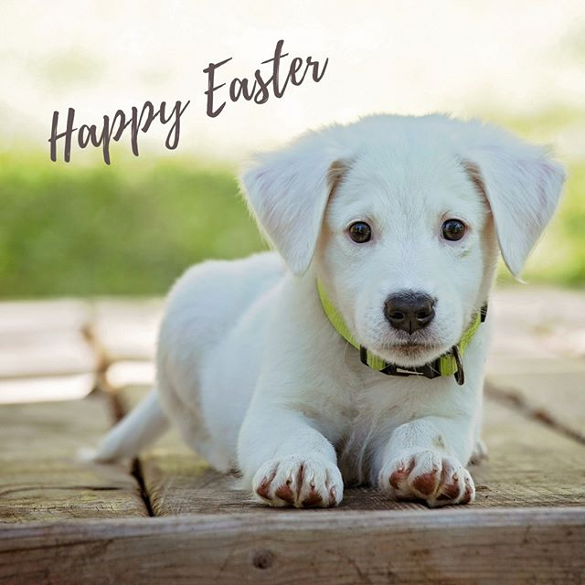 Happy Easter from Misty Valley Country Cottages! Wishing all our Misty Valley friends and family a safe and peaceful Easter holiday. We are excited for our Easter guests, who will be arriving soon, and are busy preparing some little treats to share!