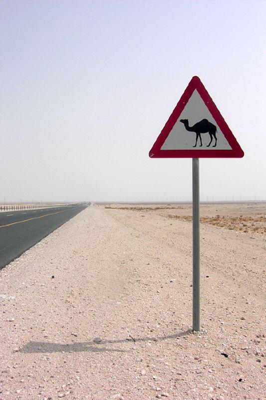 Jesus advarer fariseerne mot å sile ut myggen men svelge kamelen. Dette bruker han som en illustrasjon på å være opphengt i detaljer, uten å bry seg om det store bildet.Foto:  Geri , CC-BY 2.0.