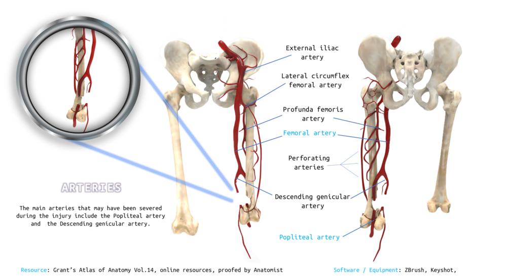 3D Models — Imi Ridley Medical illustration