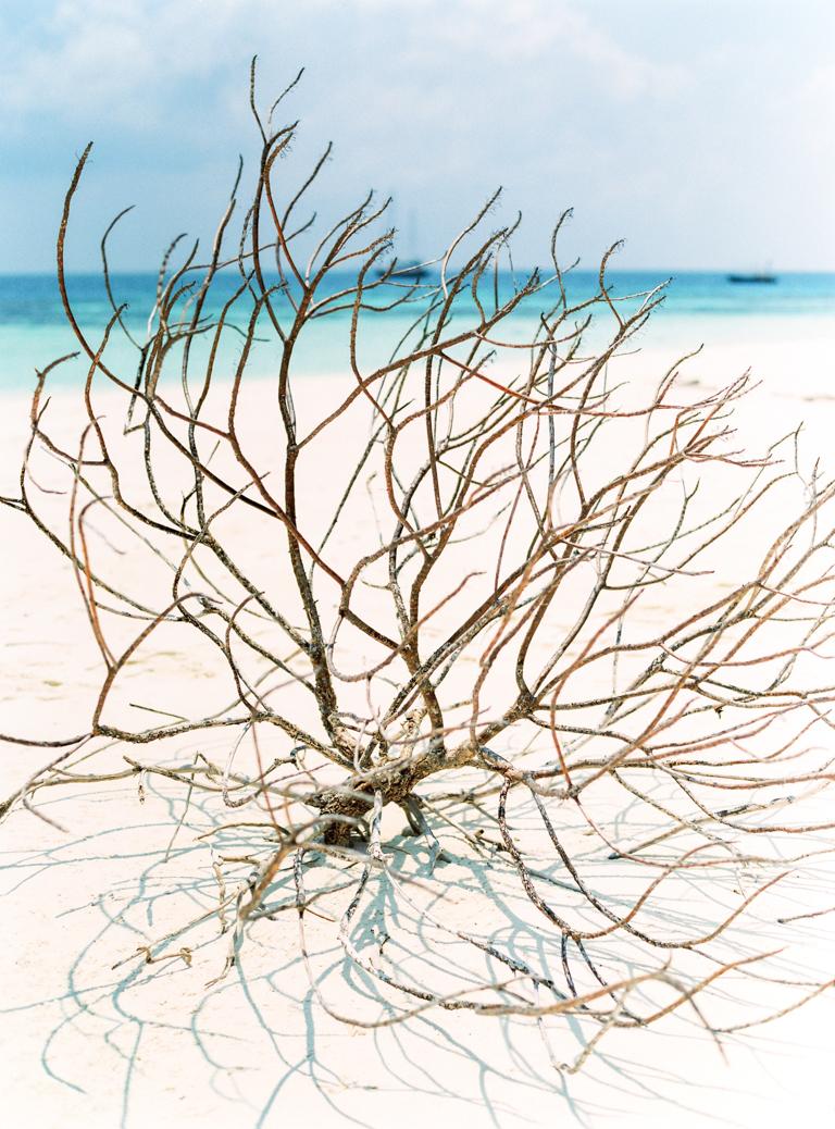Maldives Desert Island Dry Branch