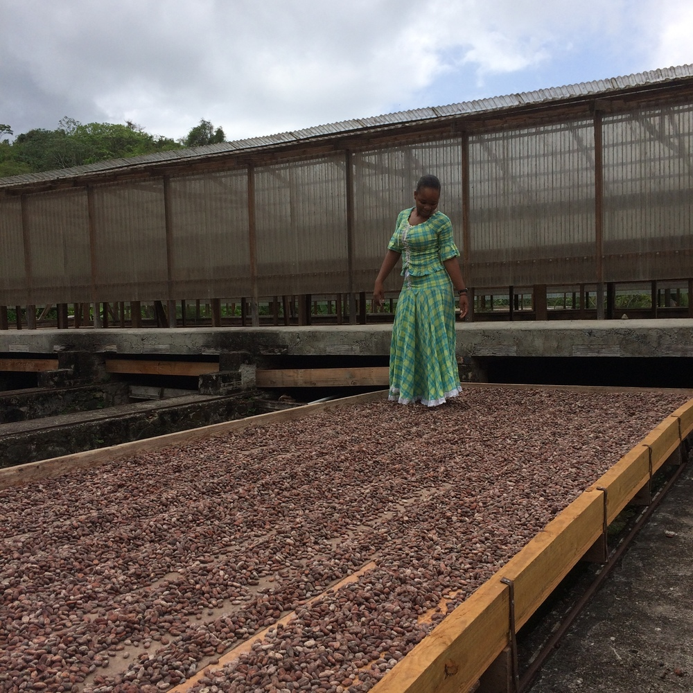 Walking the cocoa. Whilst drying, the cocoa beans are walked on. This created ridges in the layer of beans which maximises drying.
