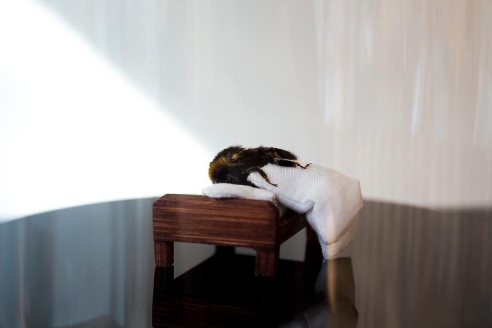 Hummel (schlaflos)