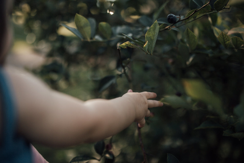 cassie-cook-photography-nesbit-blueberries-family-photographer