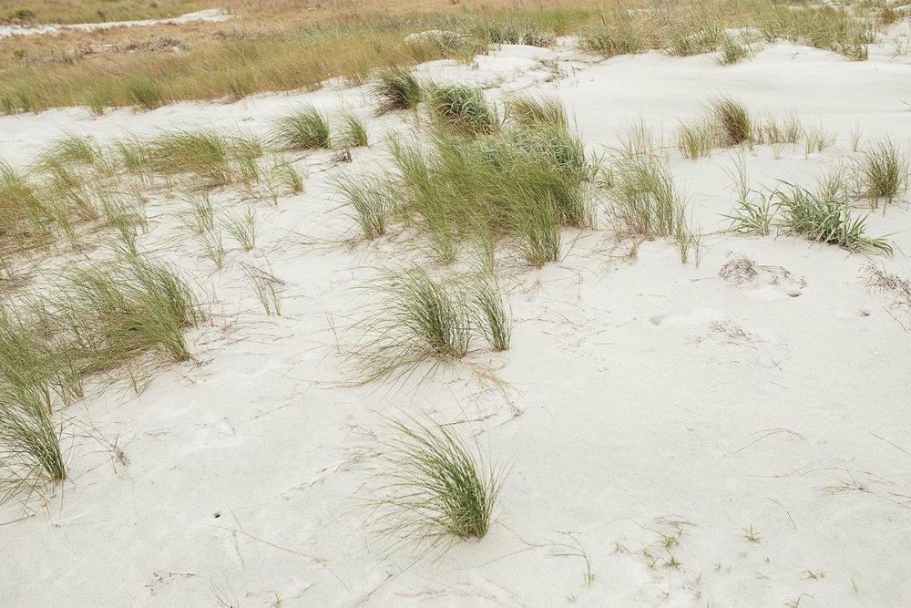 Fripp-Island-Resort-Beach-Wedding-Katie-and-Larry163.jpg