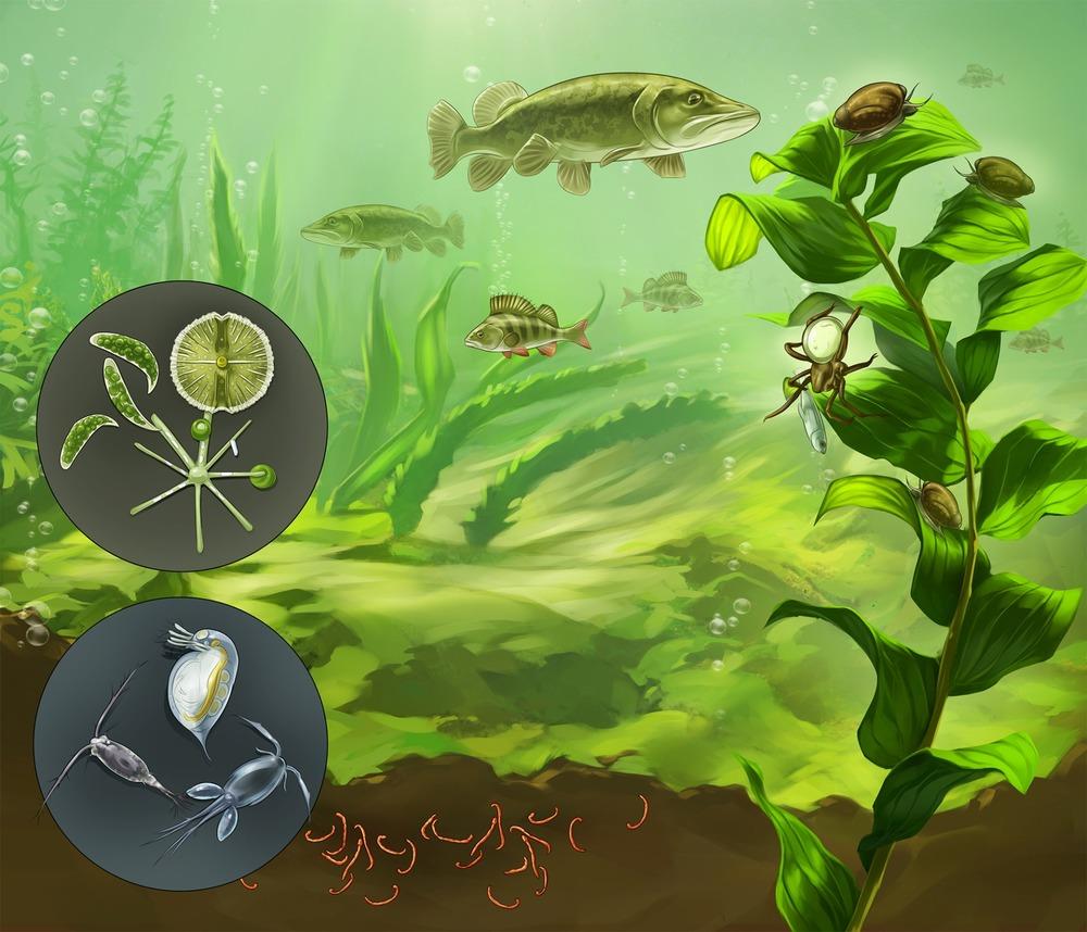 Lake Ecosystem.jpg