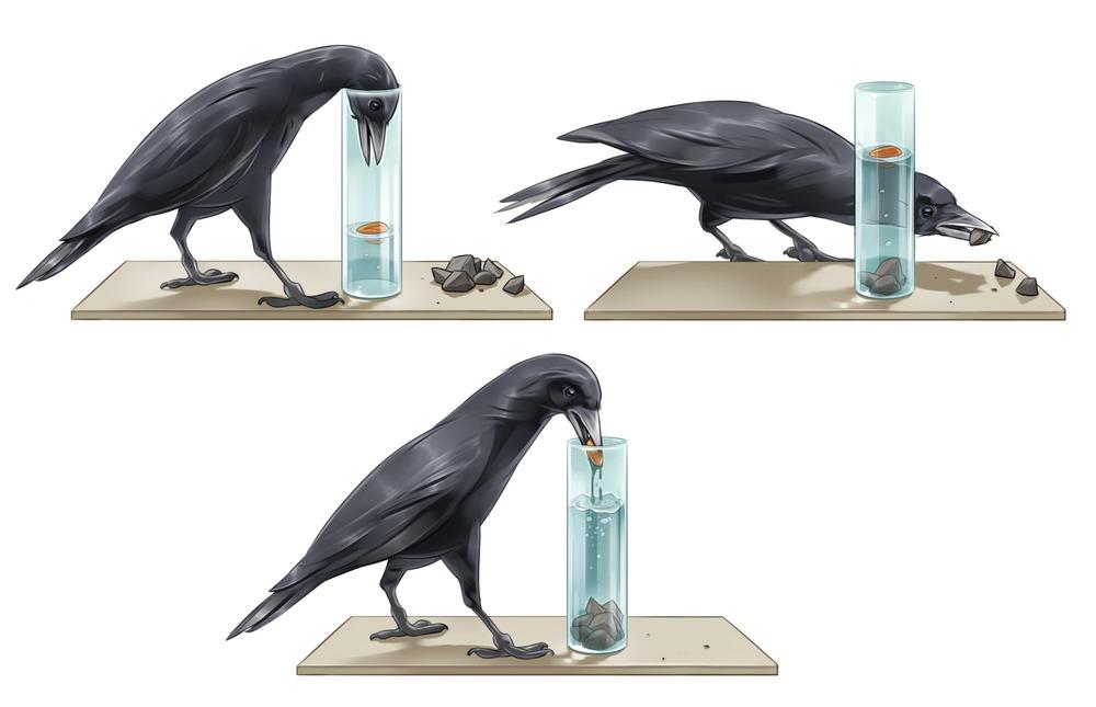 Smart Crow.jpg