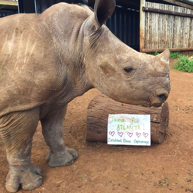 Huge thanks to all our Atlanta supporters who joined us  for #winosforrhinos a few weeks ago. All proceeds raised were donated to the awesome animals and staff @zululand_rhino_orphanage. Happy earth day to everyone out there fighting for a better planet for all!!! 🦏❤️🗺