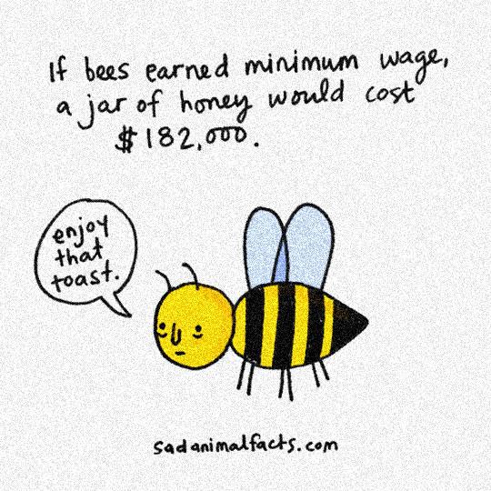 salaire abeille miel