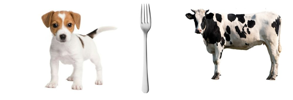 eat cow or dog