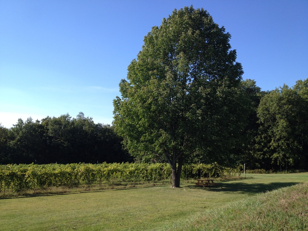 Outside space, tree, and vineyard