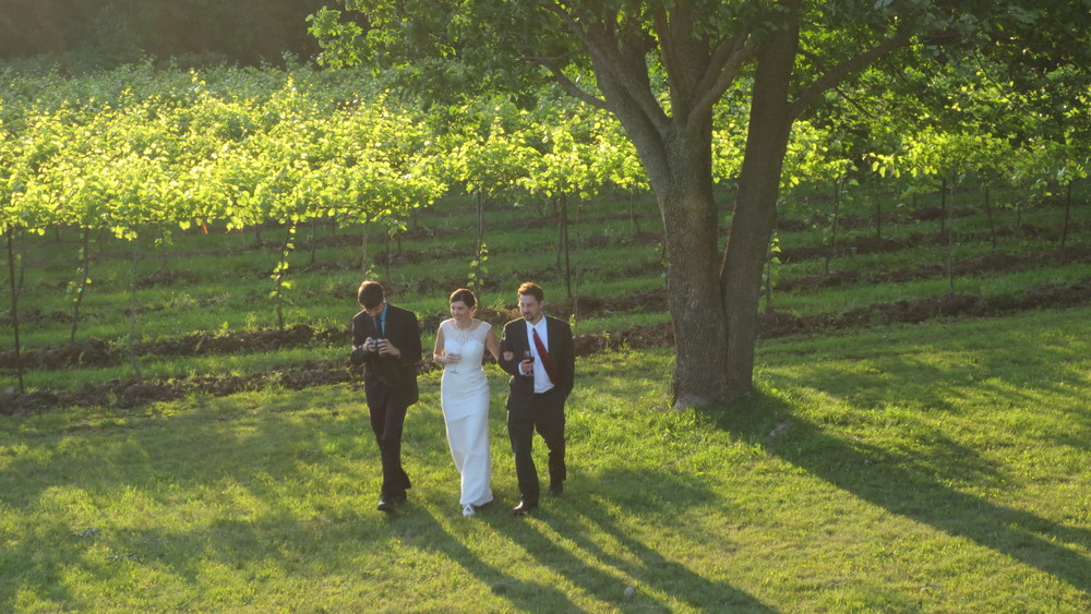 Bride walking in the vineyard