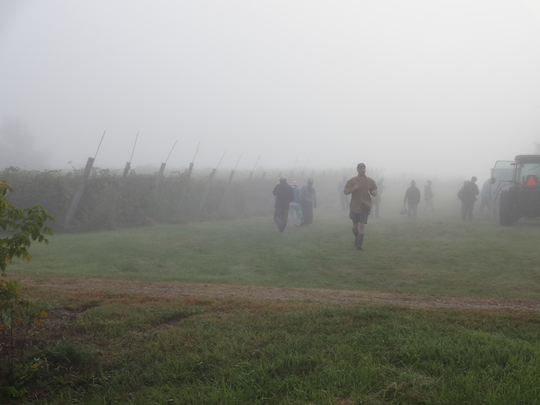 Foggy harvest