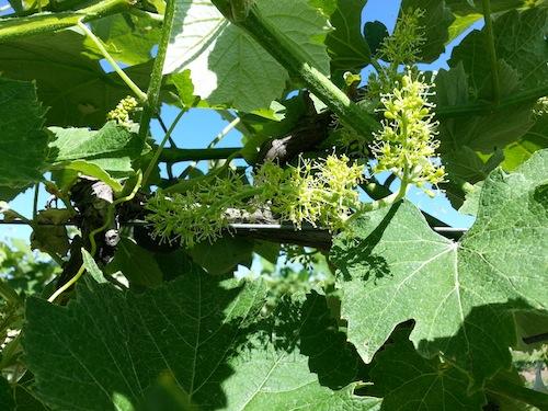spring vines 2
