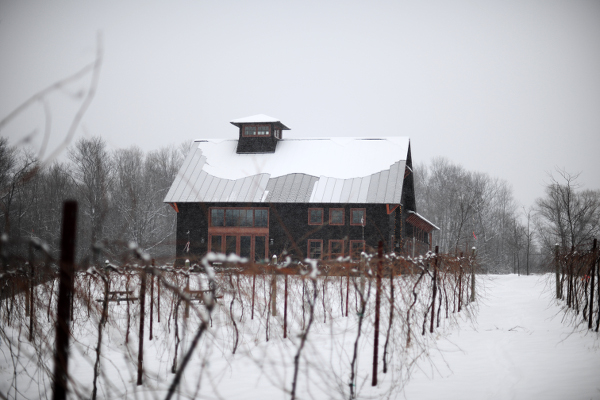 winter vine and vineyard