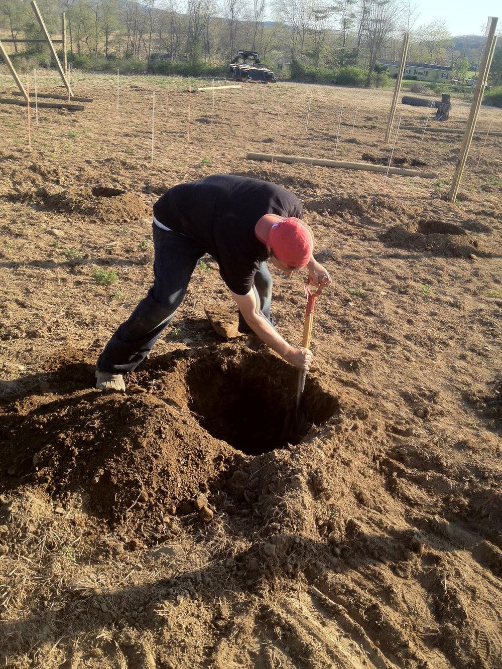 gidon digging trees.jpg