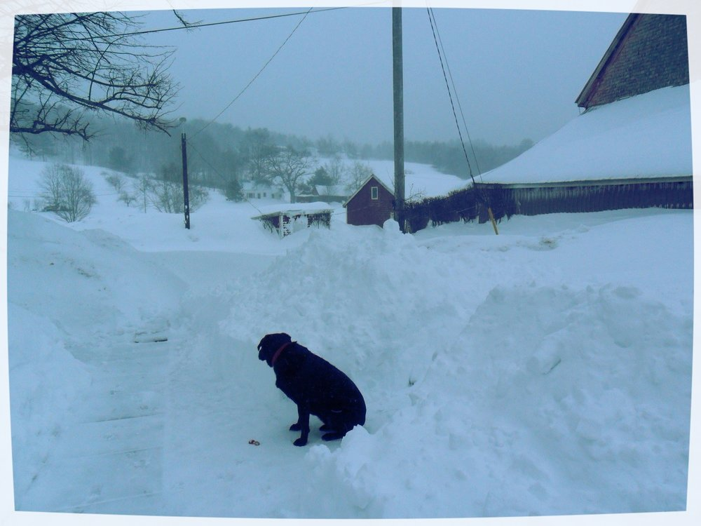 My dog, Brie, finding a path forward on my farm in the Valley
