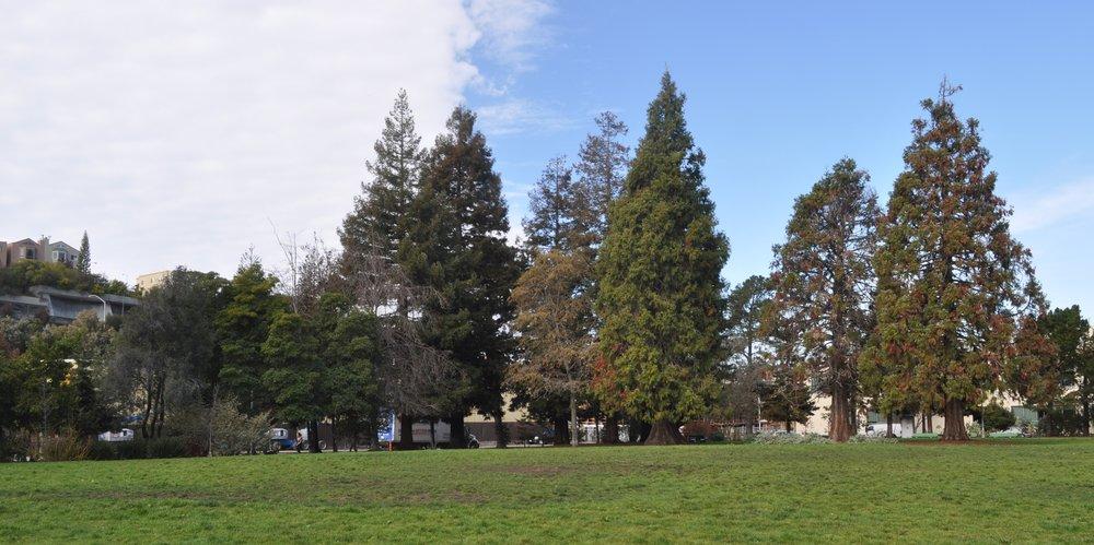 Esprit Park.jpg