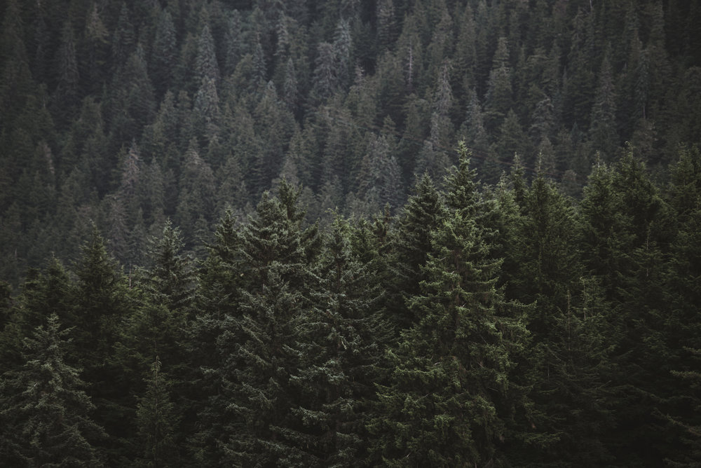 2018-Alaska-47.jpg