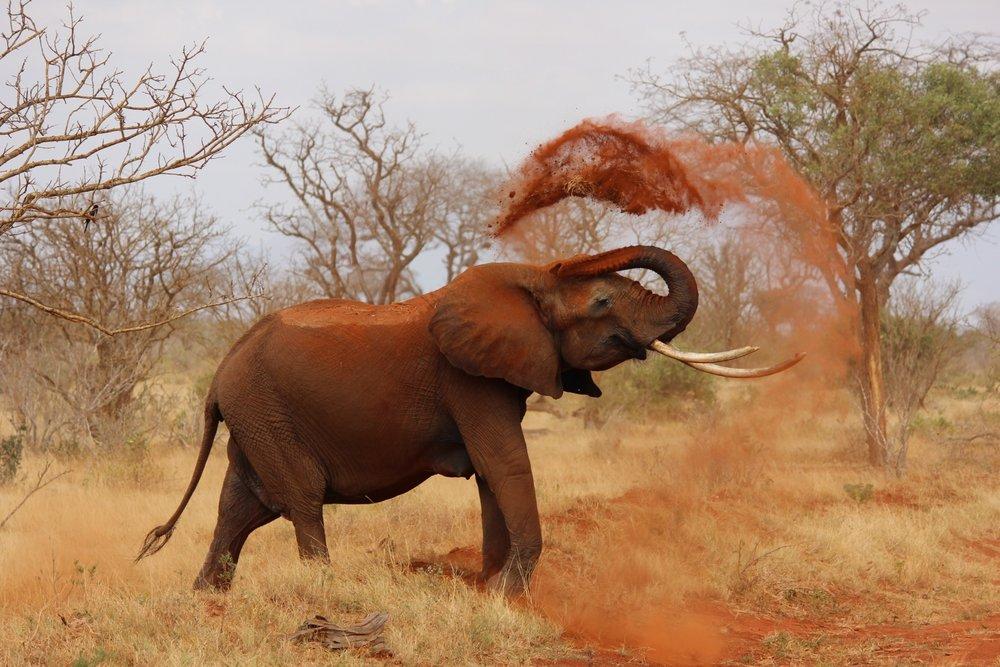 Africa (Elephant).jpeg