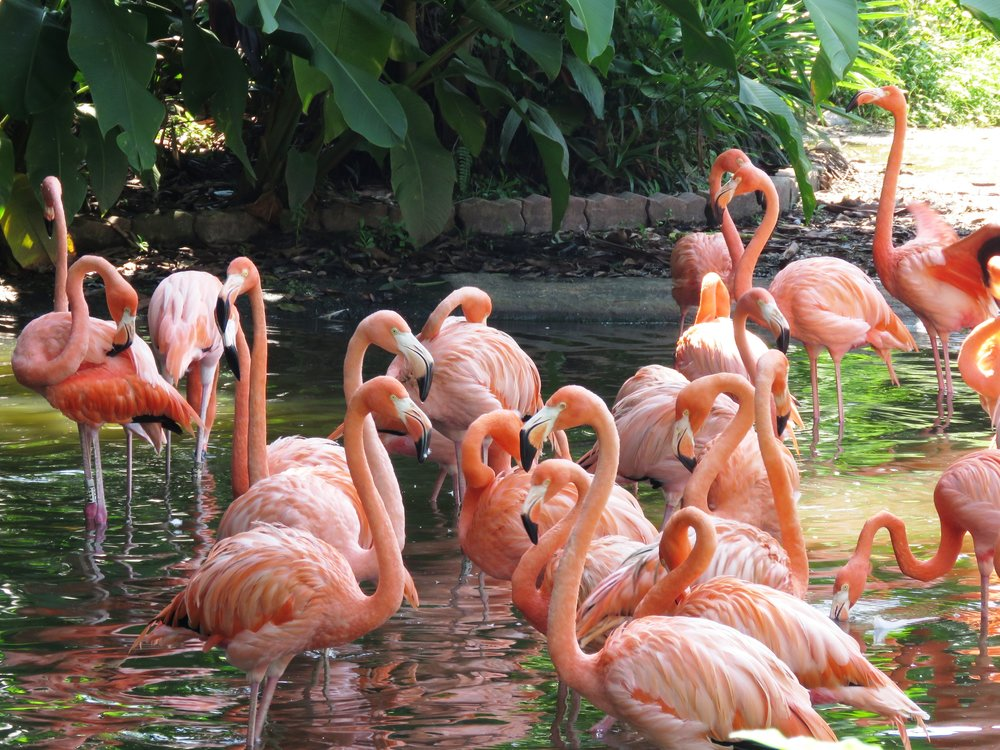 Costa Rica (Flamingos 1).jpg