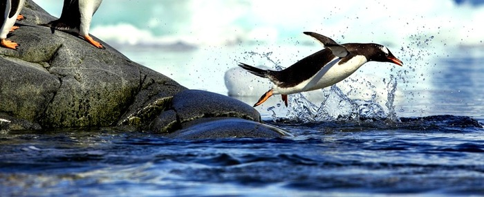 Penguins tell us a lot about the health of our oceans.