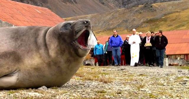 Find out what this fur seal had to say when the ashes of Frank Wild, Ernest Shackleton's best friend and colleague, were buried on South Georgia Island.