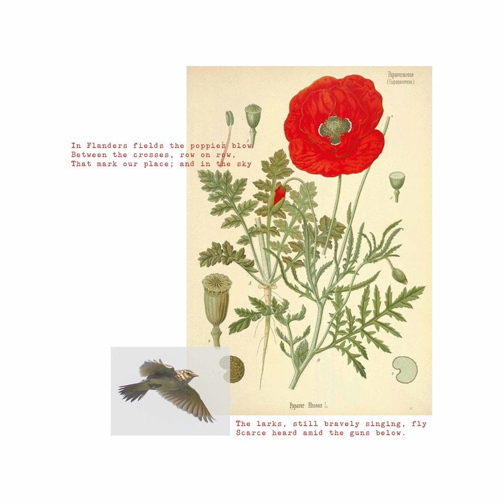 In Flanders Fields Small.jpg