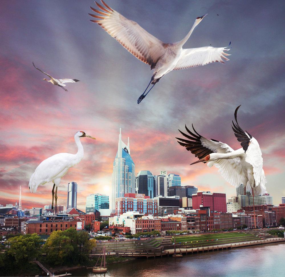 Nashville Cranes.jpg