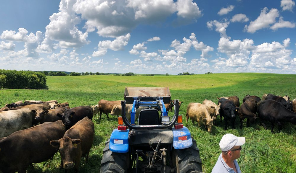 Paul Basballe gives an interactive tour of the Hidden Acres premium grass fed beef cattle.